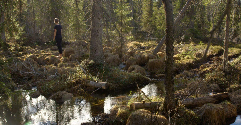 Porttiteatteri: Metsä minussa. Kuvassa ihminen seisoo metsässä, selin kameraan sammalmättäiden ja puiden keskellä.